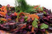 Havuçlu Kırmızı Lahana Salatası